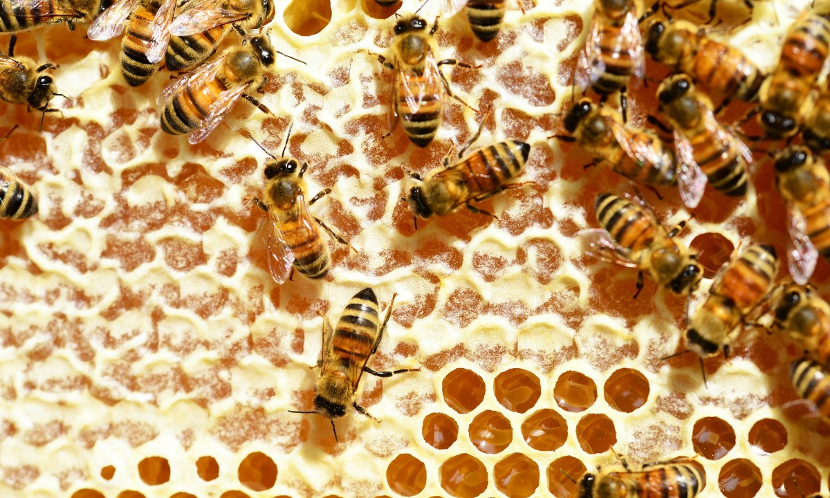 """Honeycomb chairman: current environment to create """"compelling"""" lending opportunities"""