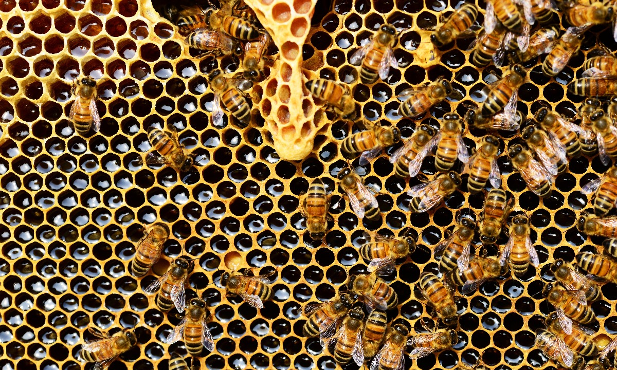 Honeycomb fund ups leverage after strong run