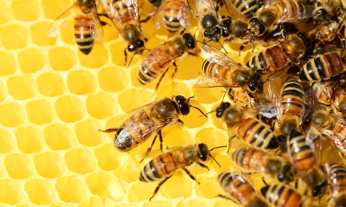 Honeycomb fund looks to new £400m cash raise