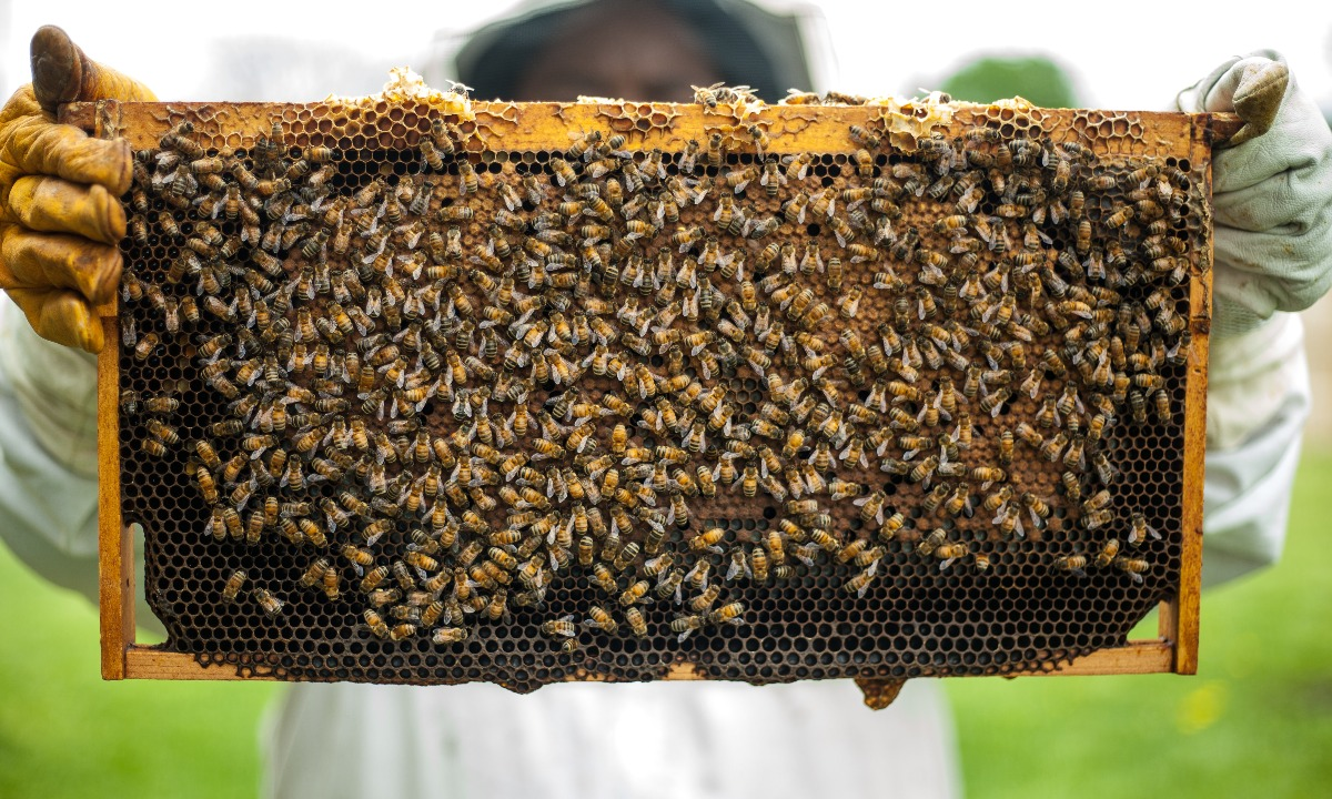 Honeycomb fund returns stay strong in May as loan book expands