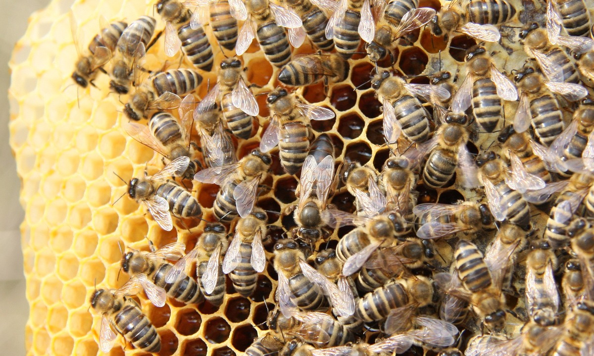 Honeycomb fund reveals portfolio mix and bad debt losses