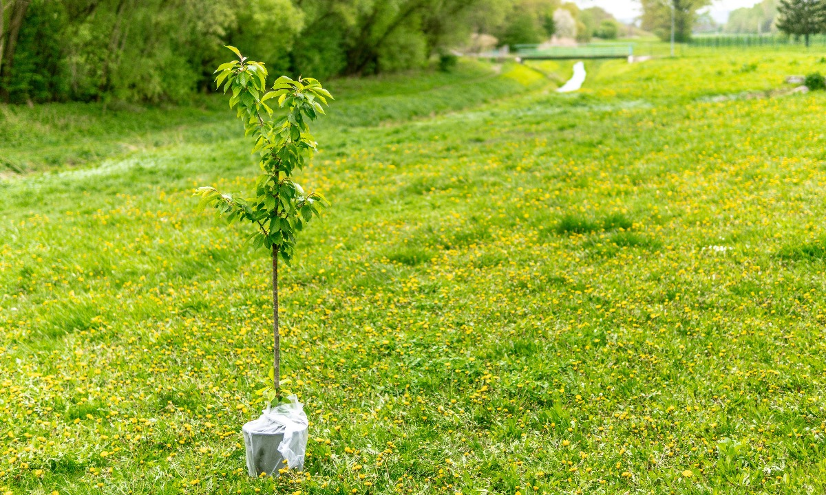This savings account from Oxbury Bank is all about planting trees